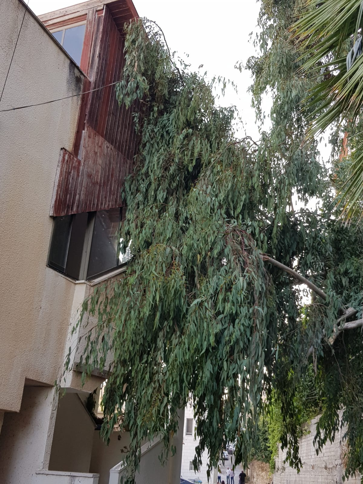 سقوط شجرة كبيرة على احد البيوت في المشيرفة